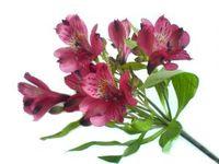 Flower_2_4