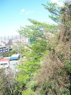 View_from_my_house_004